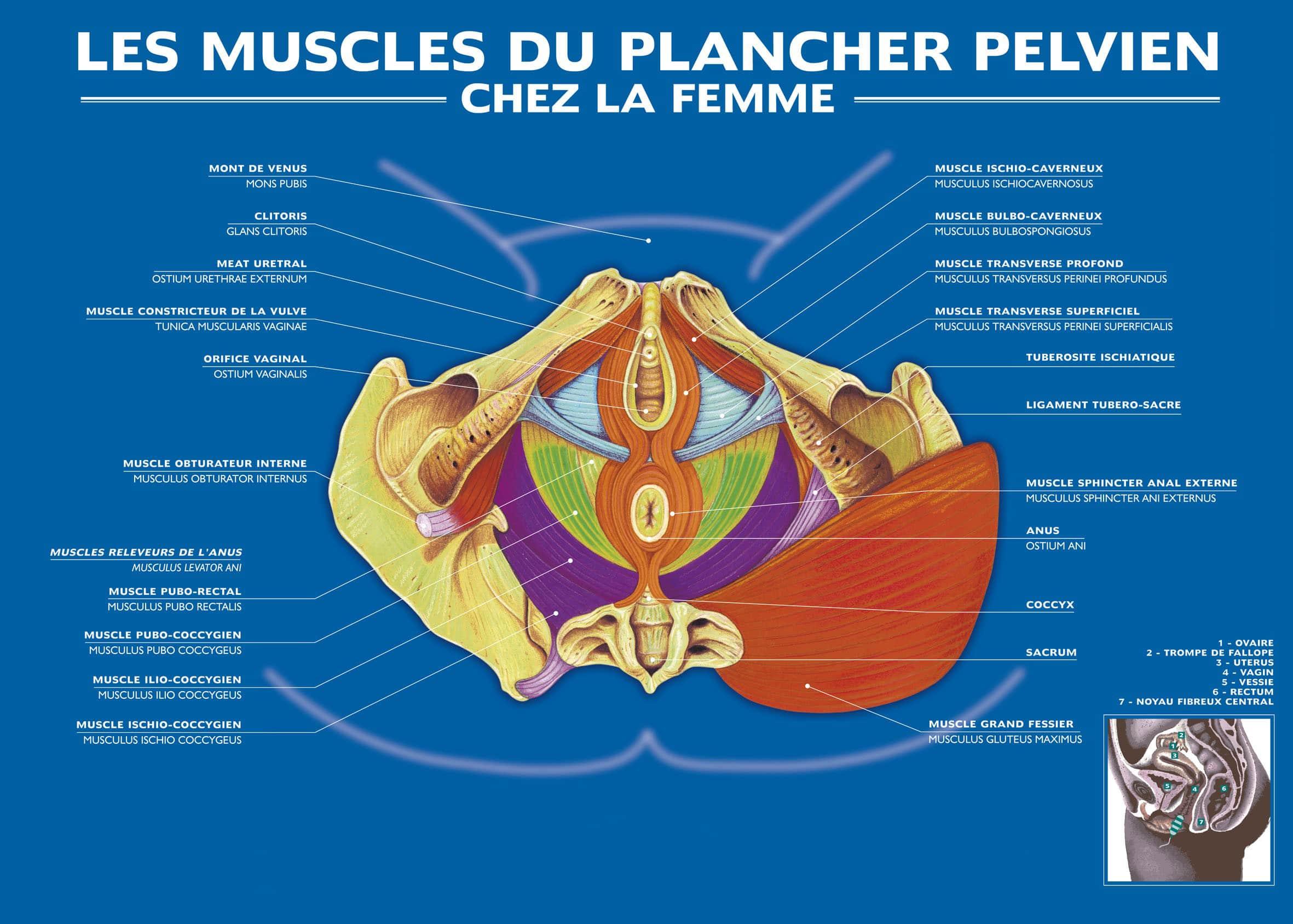 explication plancher pelvien